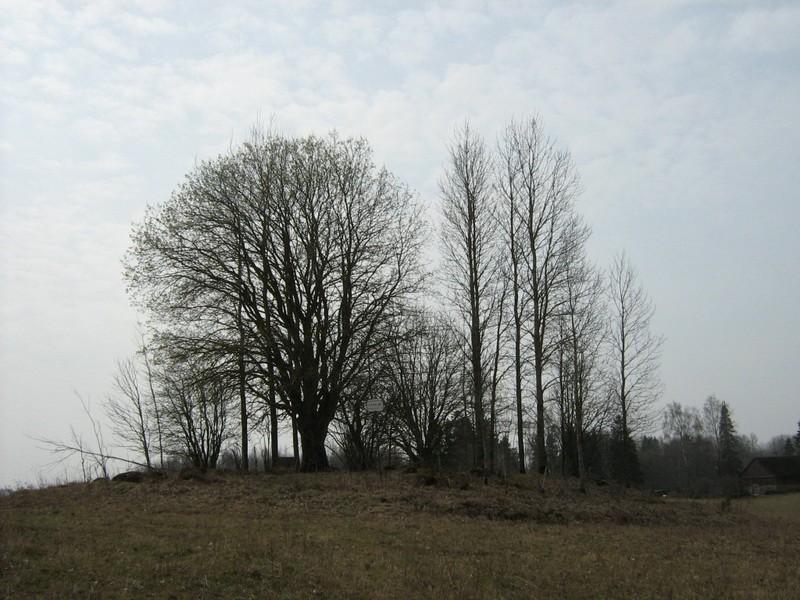 """Kivikalme """"Tuuleveskimägi"""", vaade kirdest. Foto: M. Abel, 30.04.2010."""