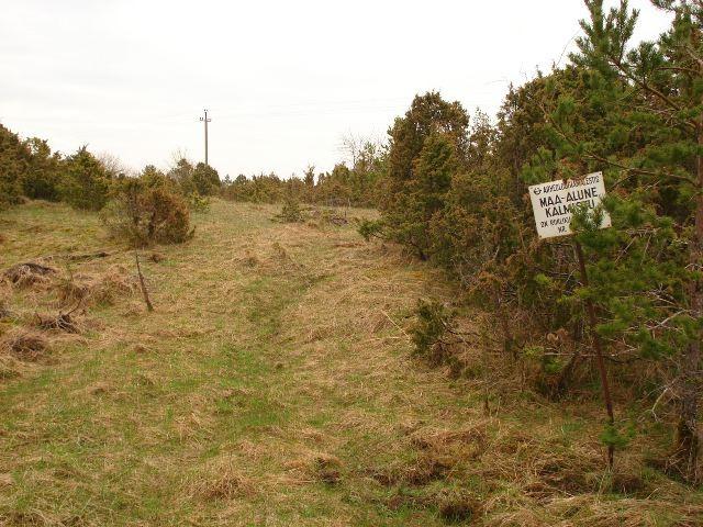 Vaade kalmistule põhjakaarest külavaheteelt. Foto: Vimberg, 2010.