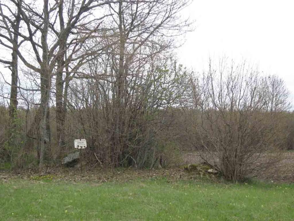 Kivikalme on muust maapinnast ligi 50 cm kõrgem kivine küngas, kaetud põliste tammedega. Foto: M. Koppel, 2010.