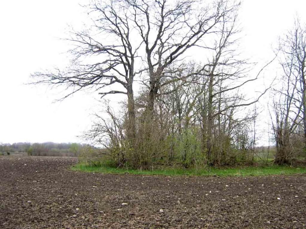 Vaade kivikalmele põhja poolt. Foto: M. Koppel, 2010.
