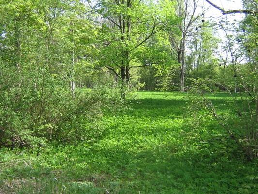 Aavere mõisa park :16074   Autor Anne Kaldam  Kuupäev:19.05 2010.
