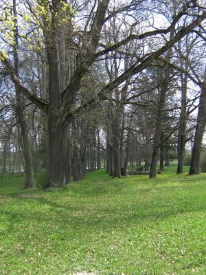 Vaeküla mõisa park, 15821. autor: Anne Kaldam aeg: 13.05.2010