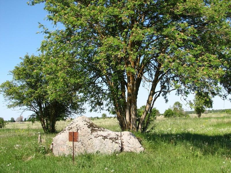 Kultusekivi reg nr 10867, vaade lõunast. Foto: E. Ehrenpreis, juuli 2006.