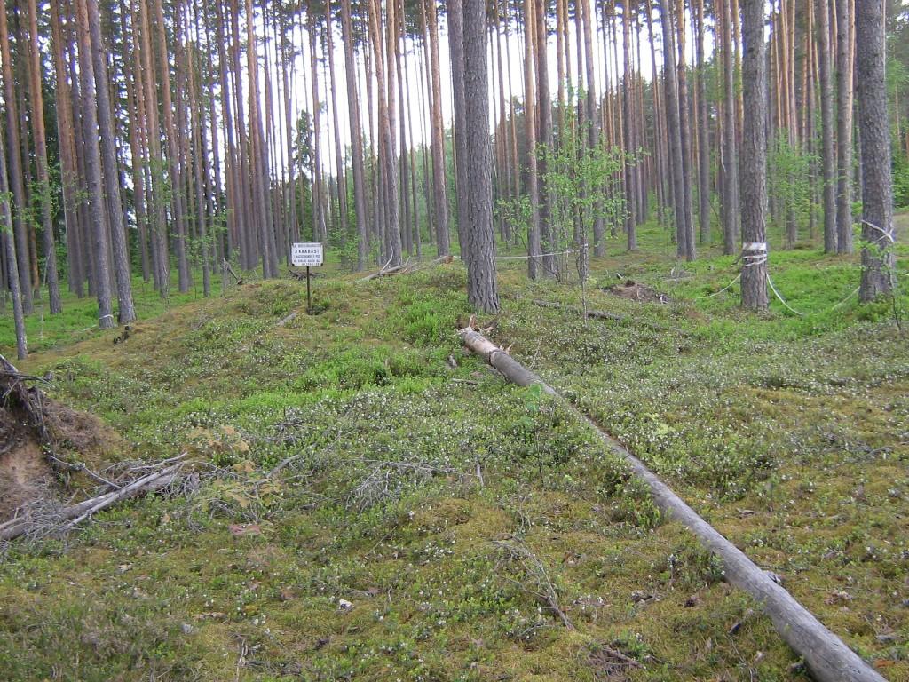Vaade põhjapoolsele kääpale. Kääpa peal on madal tähis. Foto: Viktor Lõhmus, 01.06.2010.