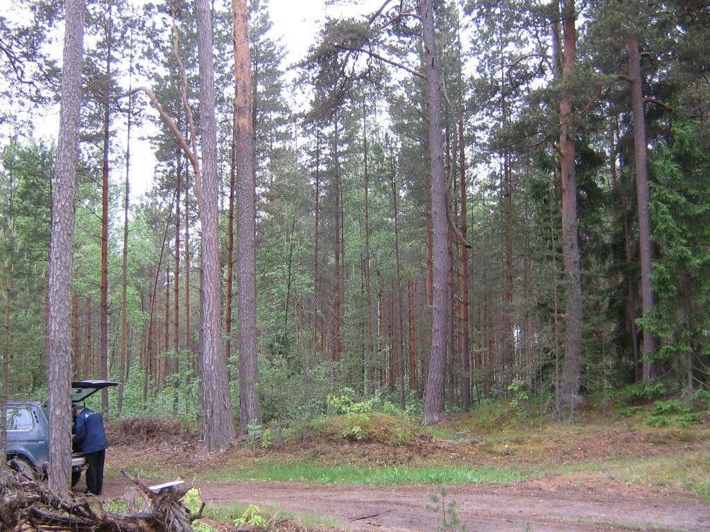 Lääniste Mihklimägi. Kalmistul kasvavad suured männid. Nende taga maapind langeb. Foto: Viktor Lõhmus, 27.05.2010.