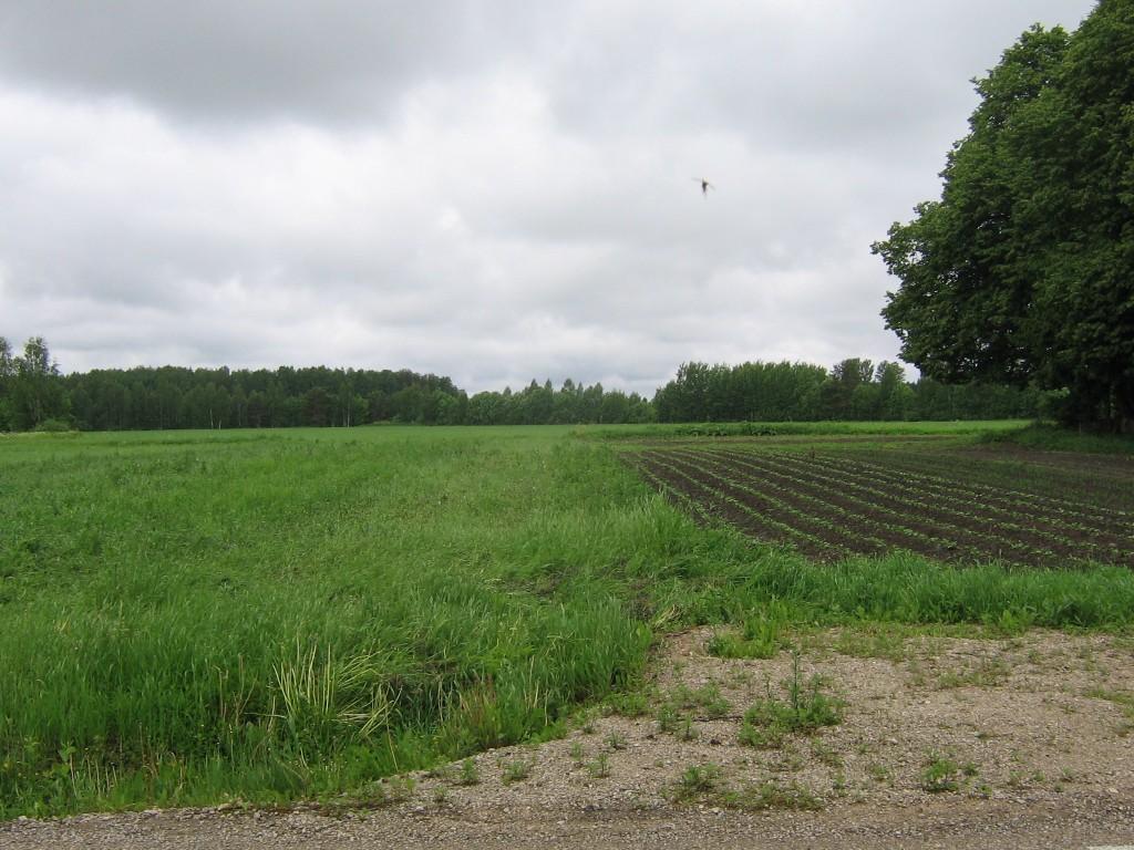 Asulakoht avatud maastikul, viljapõld ja kartulimaa. Foto: Viktor Lõhmus, 10.06.2010.