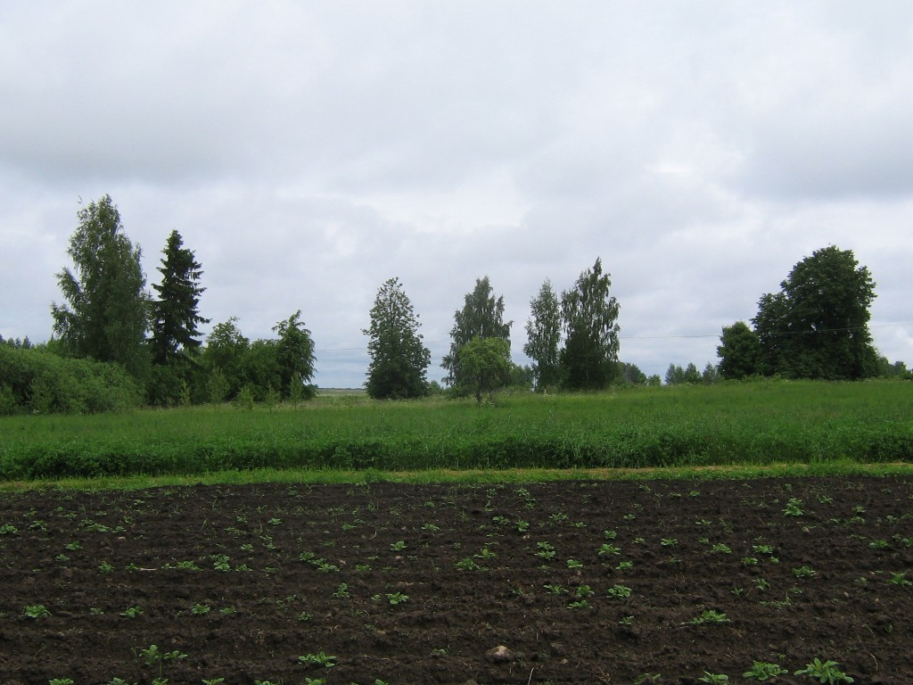 Vaade asulakoha osale, mida kasutatakse praegu põlluna. Foto: Viktor Lõhmus, 10.06.2010.