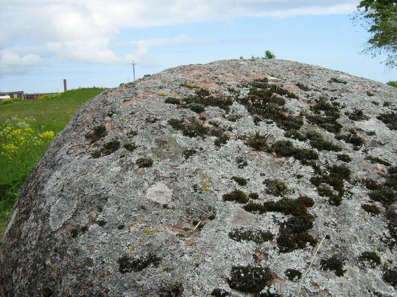 Lohud kivi pinnal. Foto: M. Abel, 10.06.2010.