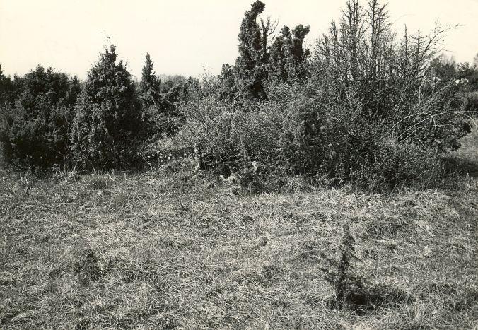 Kivikalme - idast. Foto: E. Väljal, 15.05.1983.