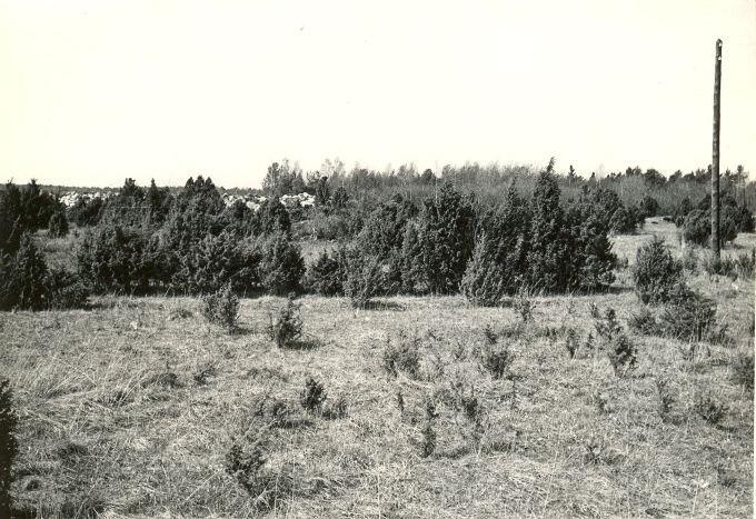 Kivikalmed reg nr 12382-12384 - idast. Foto: E. Väljal, 15.05.1983.