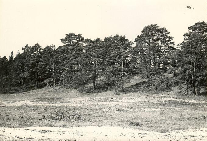 Maalinn - idast. Foto: E. Väljal, 06.05.1983. MKA arhiiv.