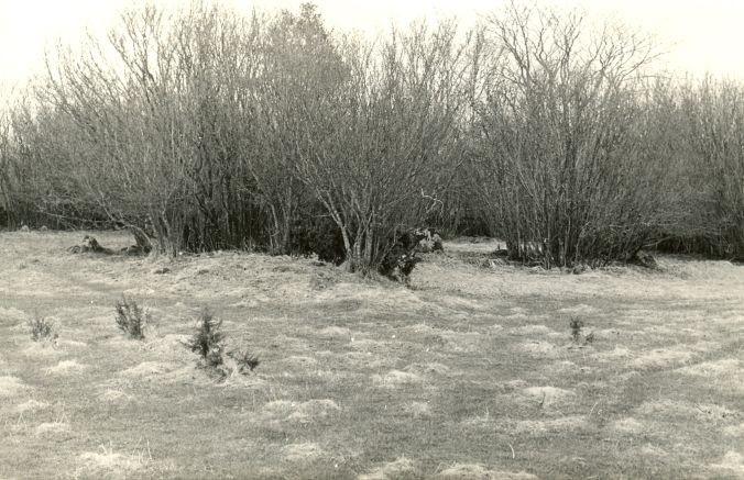 Kivikalmed reg nr 12607-12620 - põhjast. Foto: E. Väljal, 28.04.1982.
