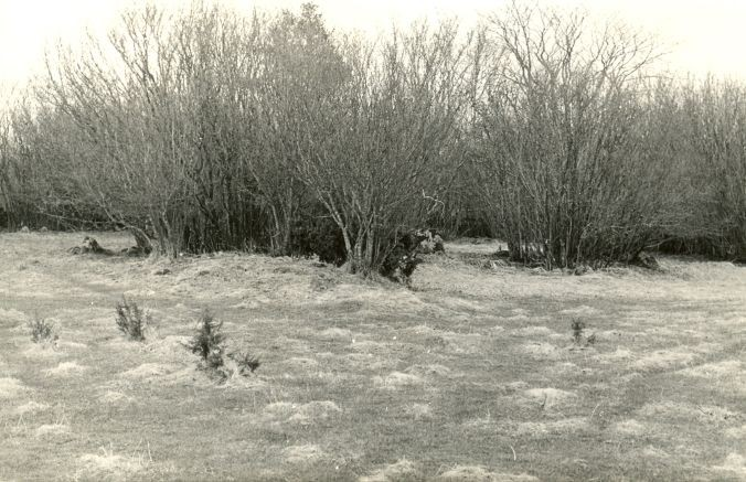 Kivikalmed reg nr 12607-12620 - põhjast. Foto: E. Väljal. 28.04.1982.