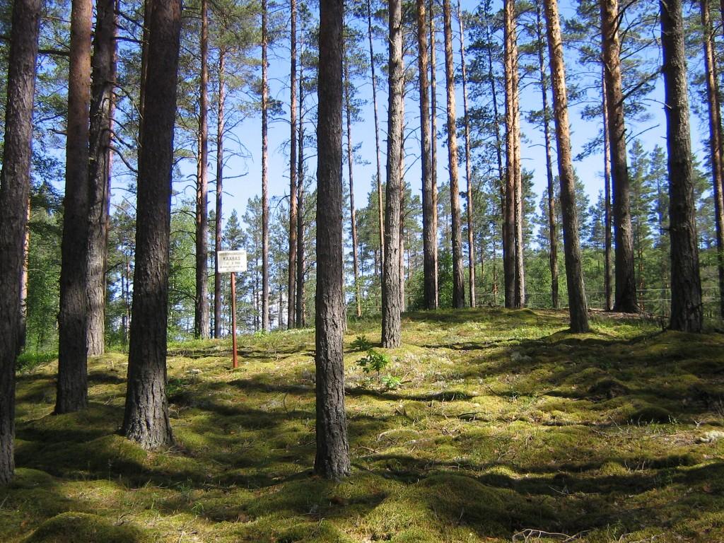 Vaade mälestise tähisele. Selle taga mäe otsas asub kääbas ise. Foto: Viktor Lõhmus, 17.06.2010.