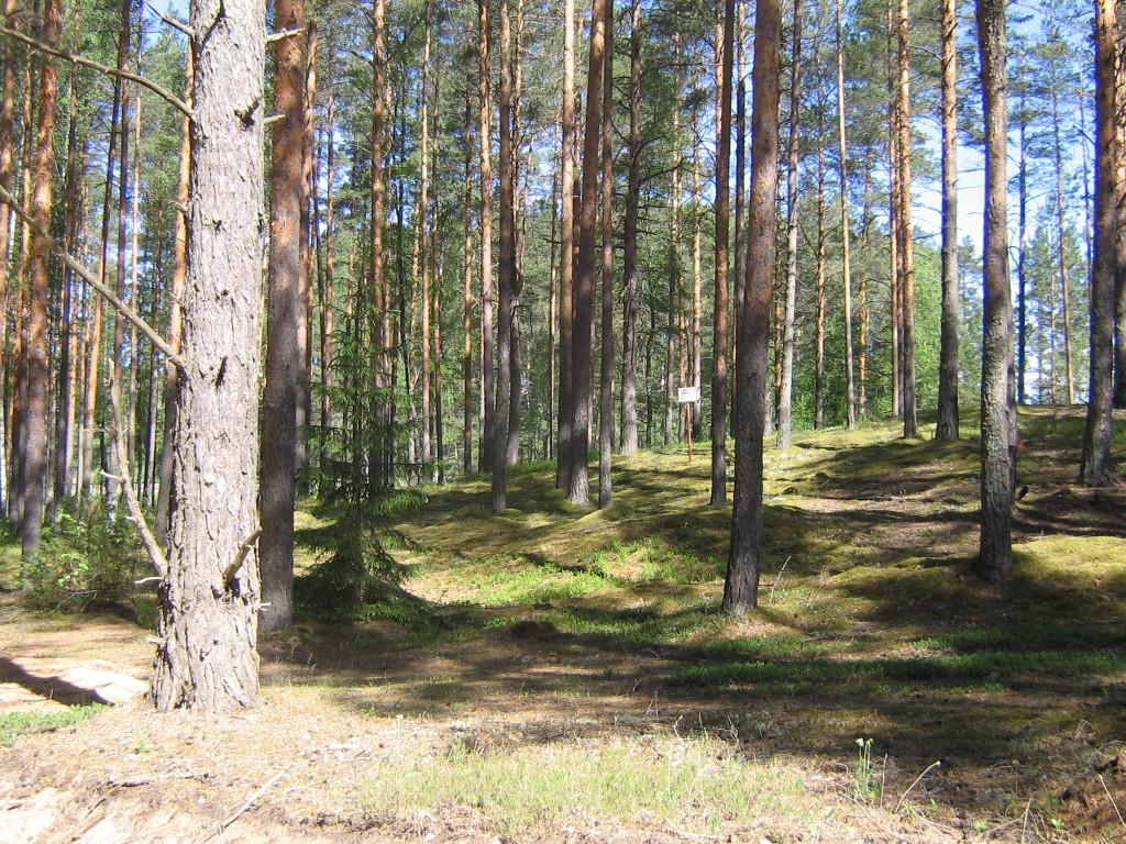 Vaade kääpale idast. Foto: Viktor Lõhmus, 17.06.2010.