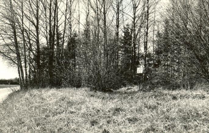 Kivikalme - kagust. Foto: E. Väljal, 09.05.1991.