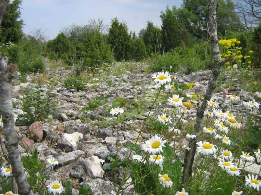 Kivikalme lähivaade kiviklibuga (läänest). Foto: M. Koppel, 22.07.2010.