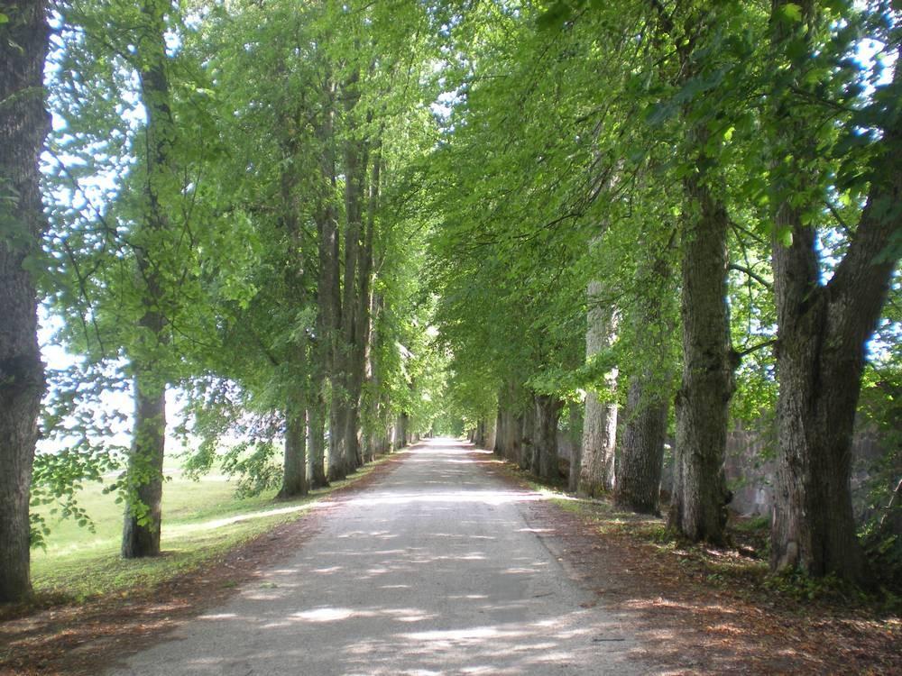 Olustvere mõisa alleed Foto Riina Pau 30.07.2010