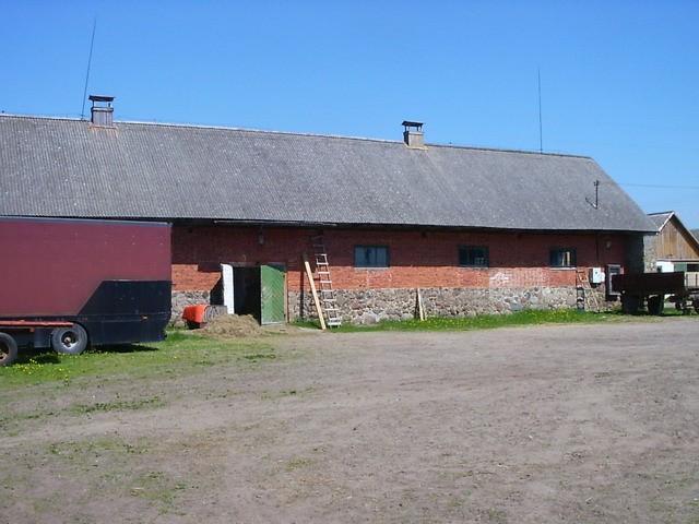 Väravast tulles vasakut kätt esimene tall. Foto: Ulla Kadakas, 24.05.2005