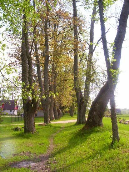 fragmendid regulaarpargist  Autor S.Konsa  Kuupäev  27.05.2005