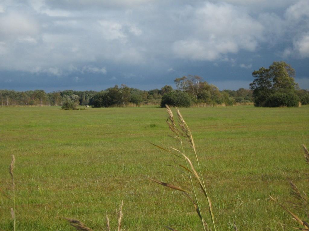 Vaade lääne suunast teelt vana jõesängi kohalt. Foto: Kalli Pets, 15.09.2010.