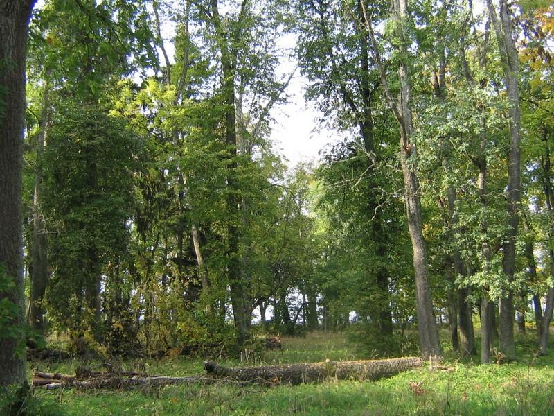 Avanduse mõisa park, 15625 vaade pargi läänepoolsele osale     pilt: Anne Kaldam  aeg: 24.09.2010
