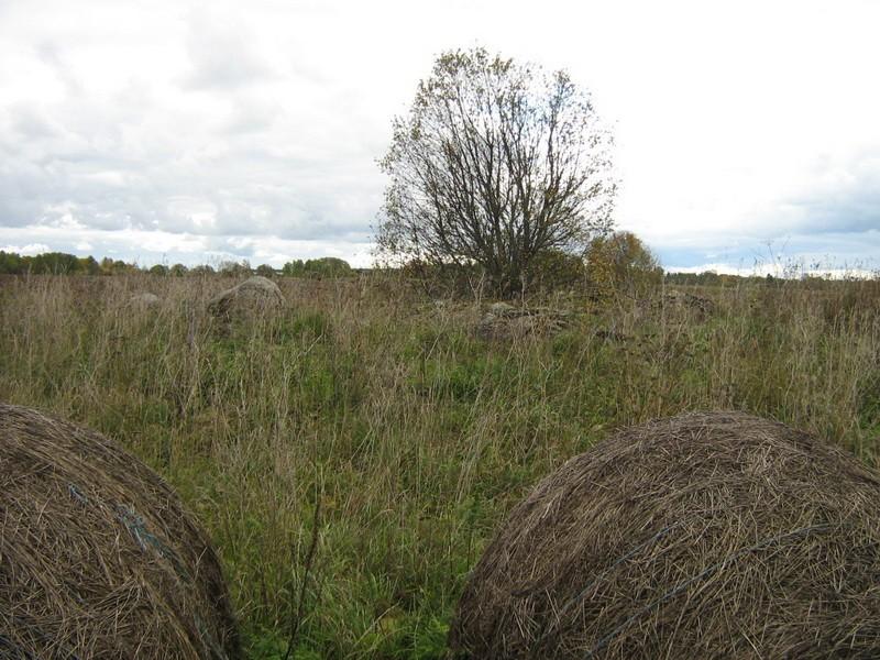 Kivikalme, reg nr 10703. Foto: Ingmar Noorlaid, 30.09.2010.
