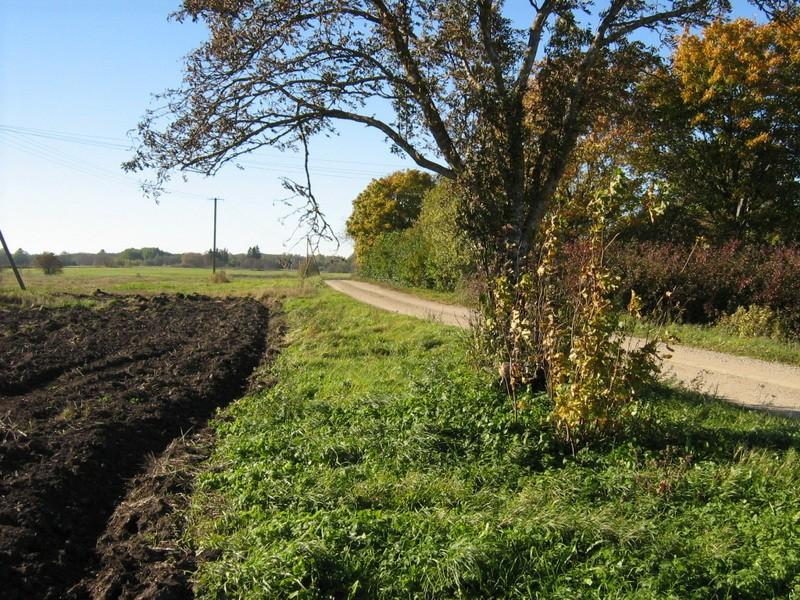 Asulakoht, reg nr 10887. Foto: Ingmar Noorlaid, 07.10.2010.