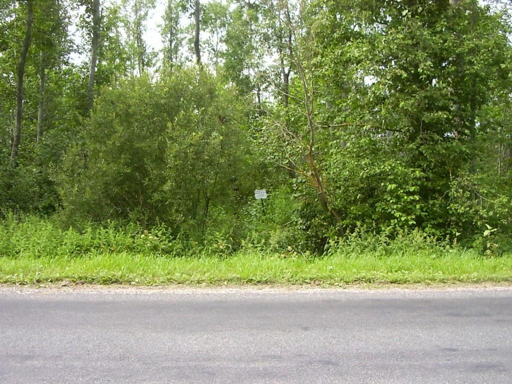 Ohvrikivid asuvad hiiekohas allika juures. Foto: Ulla Kadakas, 26.07.2005.