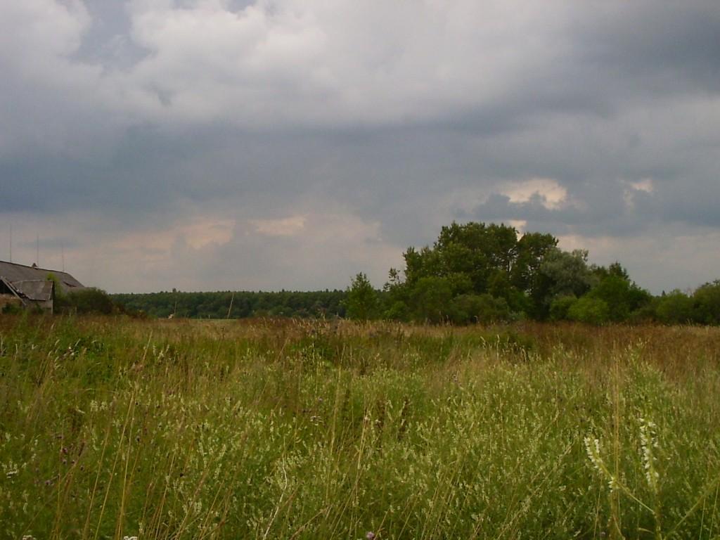 Allikas asub taamal paistvas võsatukas. Foto: Ulla Kadakas, 26.07.2005.