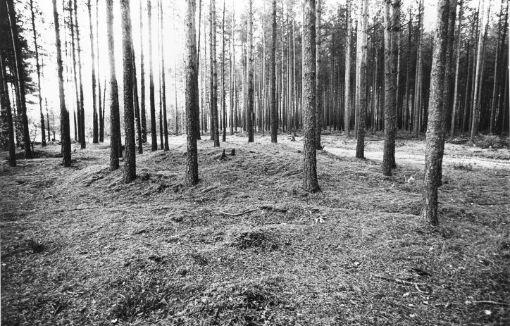Kääpad. Foto: M. Pakler, 25.09.1979.