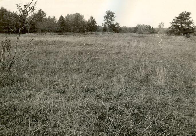 Linnamäe õu kagust. Foto: E. Väljal, 1985.