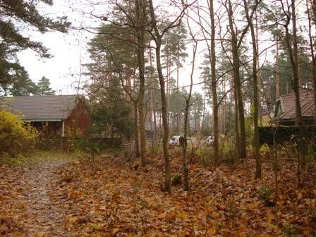 Vaade Sindi-Lodja III asulakoha põhjapoolsele osale, Paikuse alevik, Toominga tänav. Foto: Karin Vimberg, 02.11.2010.