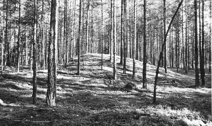 10 kääbast. Foto: M. Pakler, september 1975.