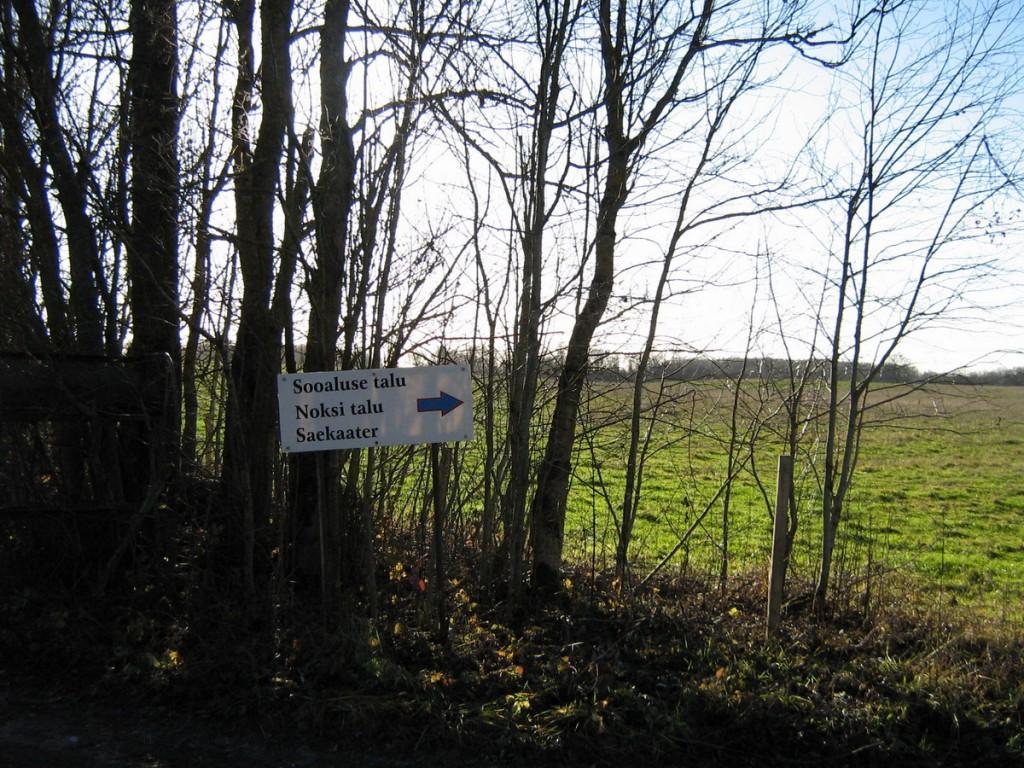 Vaade põhjapiirilt edela suunas. Foto: Kalli Pets, 05.11.2010.