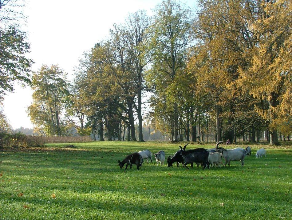 muruniidukid  Autor J.Vali  Kuupäev  11.10.2005