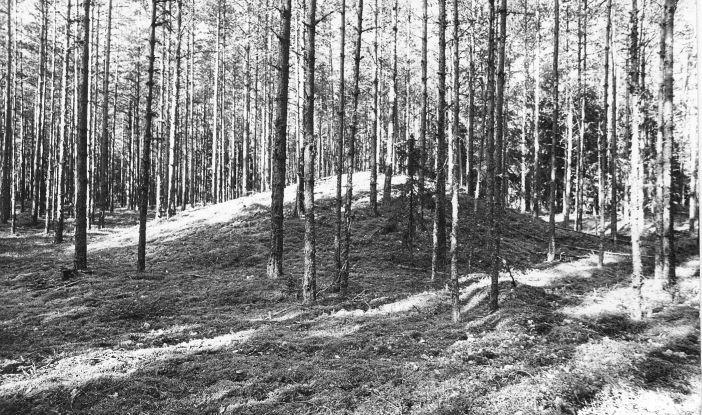 10 kääbast. Foto: M. Pakler, september 1975 (täielik pass on reg nr 13 493 juures).