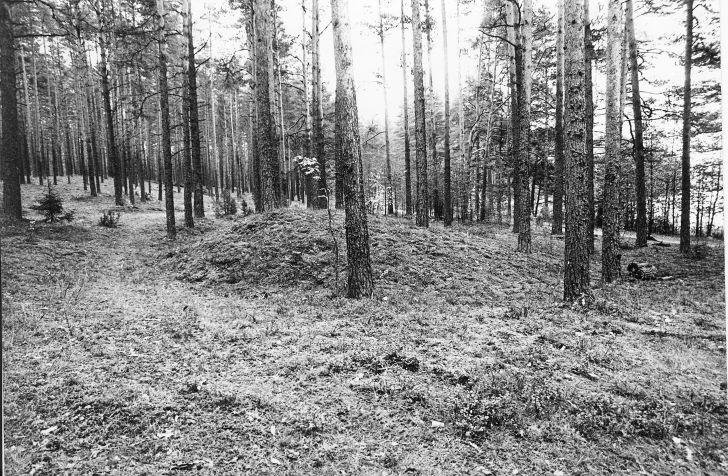 Kääpad. Foto: M. Pakler, september 1979.