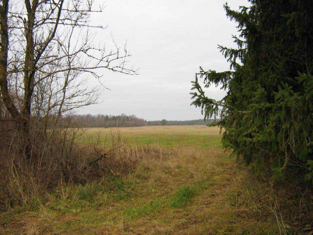 Vaade kaguosast tee serva lähedalt põhja poole. Foto: Kalli Pets, 10.11.2010.