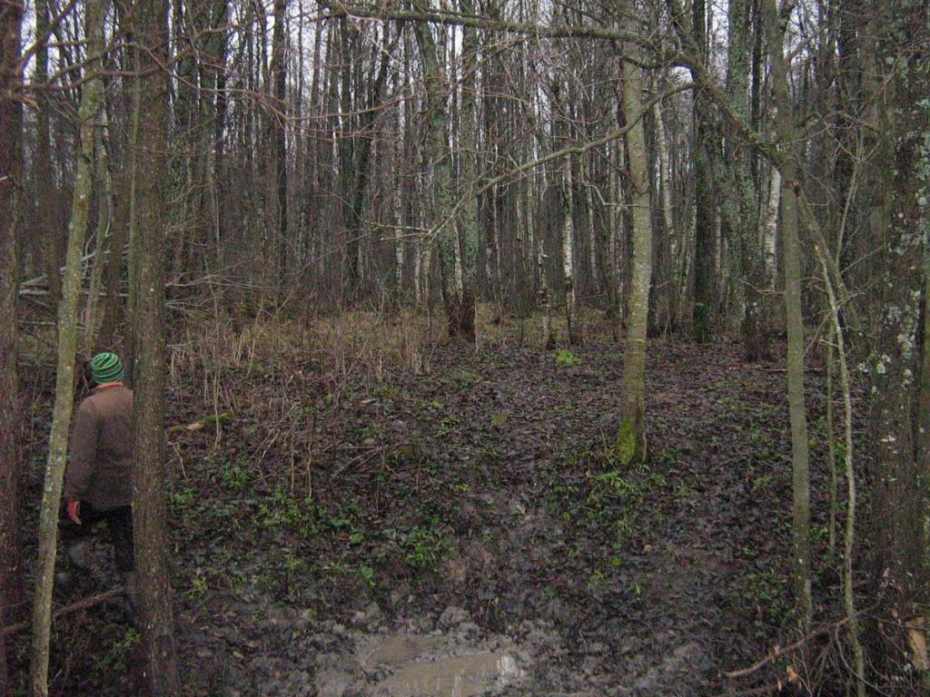 Vaade lähenedes metsaservast. Foto: Kalli Pets, 11.11.2010.
