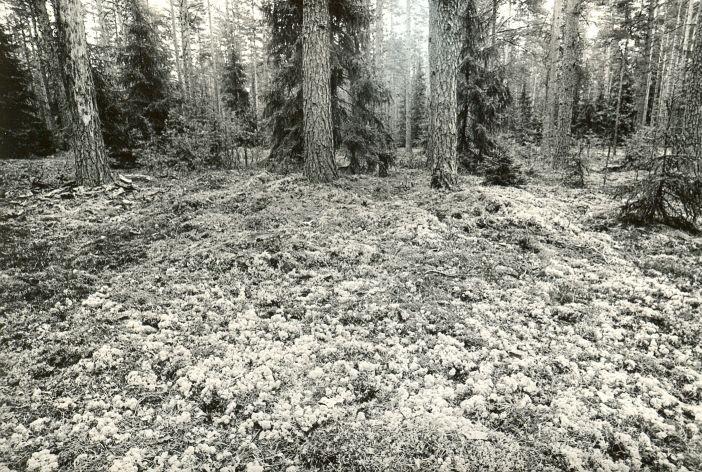 Kivikalme. Foto: M. Pakler, 25.09.1979.
