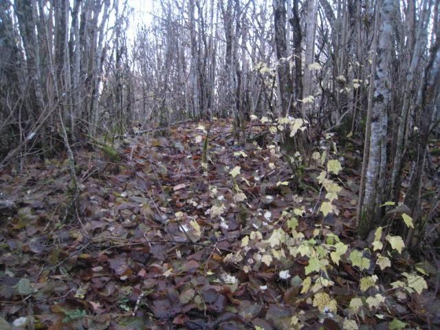Vaade alale, kus asuvad kivikalmed reg nr 12689 ja 12690. Foto: Karin Vimberg, 26.10.2010.