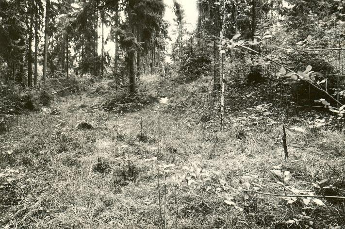 Linnamägi. Foto: M. Pakler, 13.09.1979.
