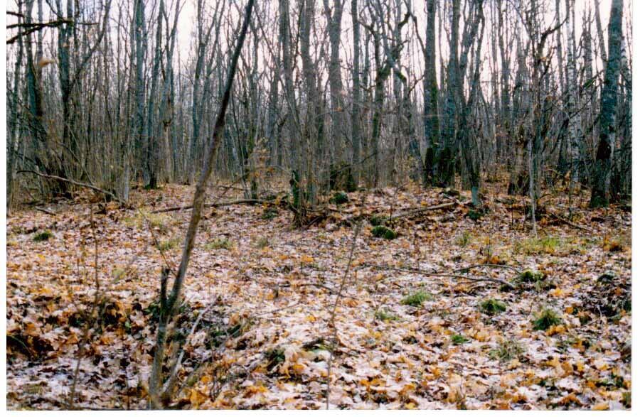 Vaade kalmeväljale. Foto: Tõnu Sepp, 1999.
