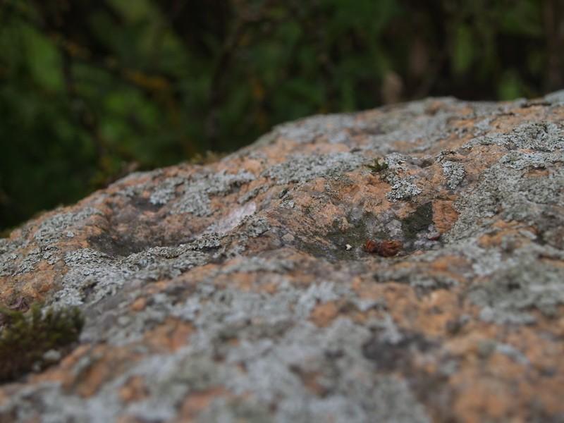 Lohukivi reg nr 10511. Foto: Tõnno Jonuks, 13.09.2010.