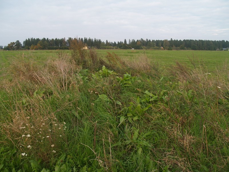 Lohukivi reg nr 10489. Foto: Tõnno Jonuks, 13.09.2010.
