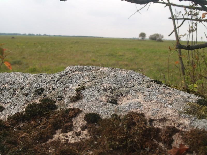 Lohukivi reg nr 10480. Foto: Tõnno Jonuks, 14.09.2010.