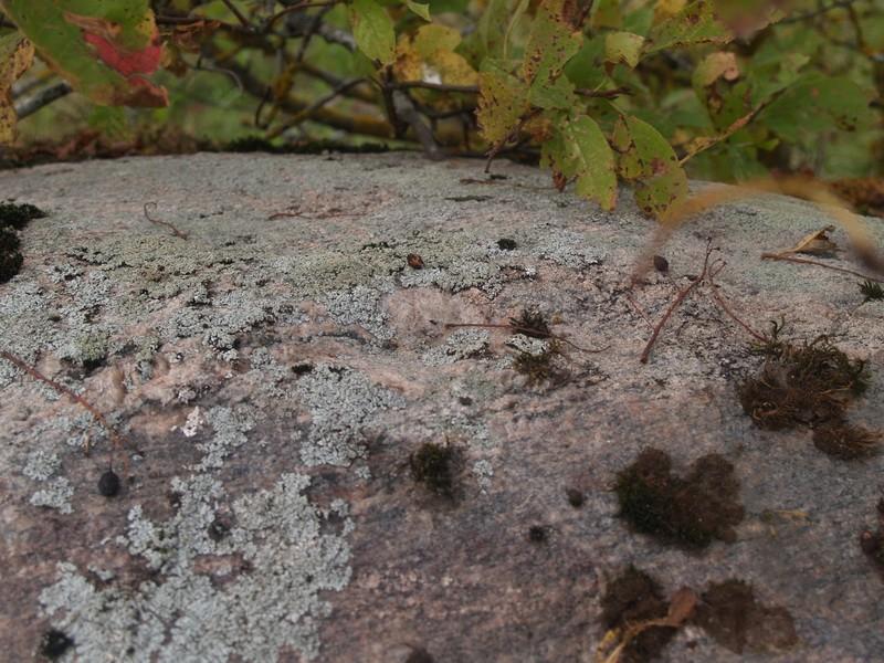 Lohukivi reg nr 10477. Foto: Tõnno Jonuks, 14.09.2010.