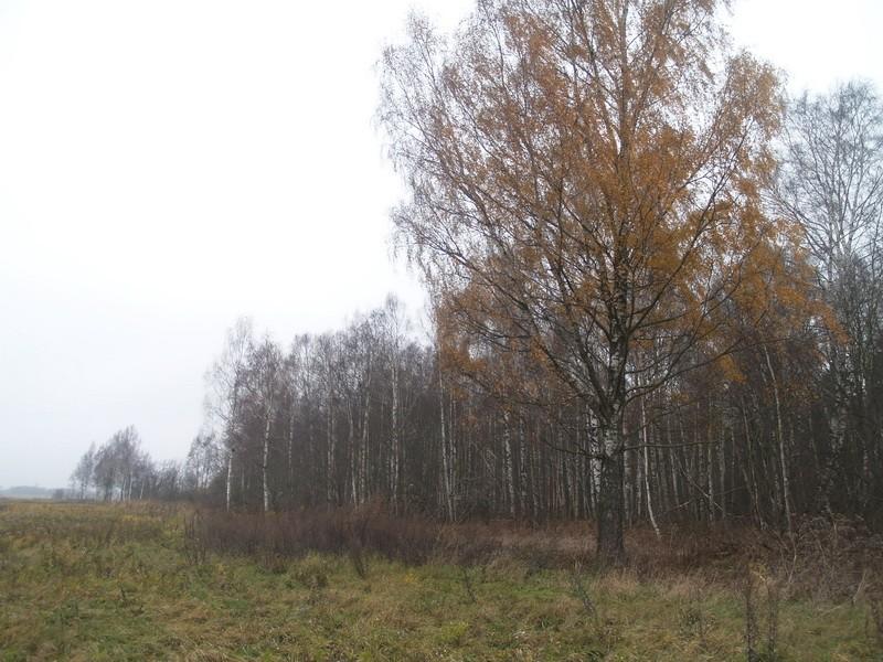 Ohvriallikas reg nr 10504. Foto: Tõnno Jonuks, 01.11.2010.