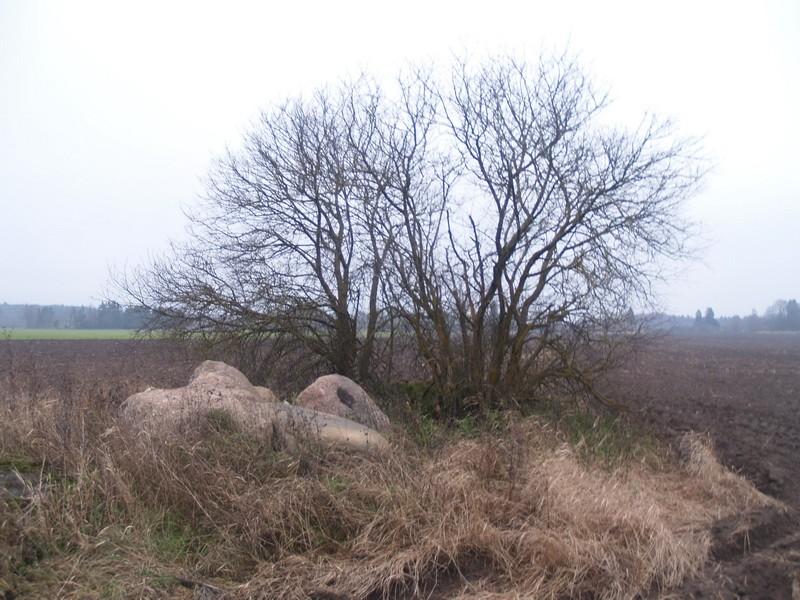 Lohukivi reg nr 10450. Foto: Tõnno Jonuks, 01.11.2010.